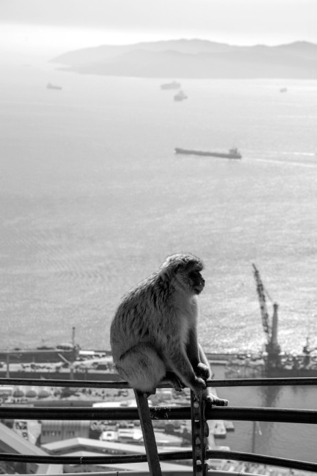 Gibraltar United Kingdom England Europe ape travel photo Markus Isomeri