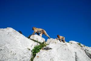Gibraltar United Kingdom England Europe ape travel photo Markus Isomeri